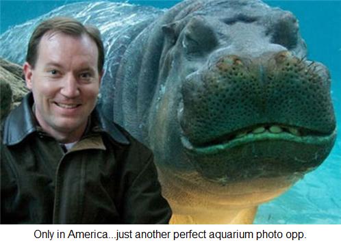 Perfect aquarium photo opp.
