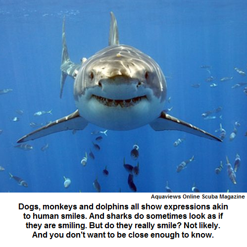 Do sharks really smile?